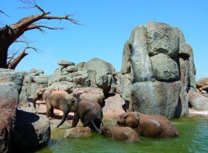 Bioparc Valencia Elefantes