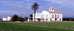 Huerta de Alboraya